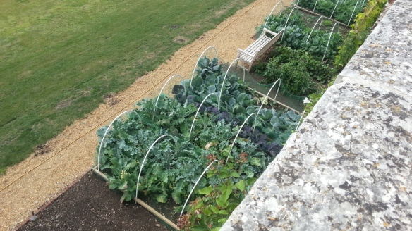 Talbot Hotel vegetable patch, Malton