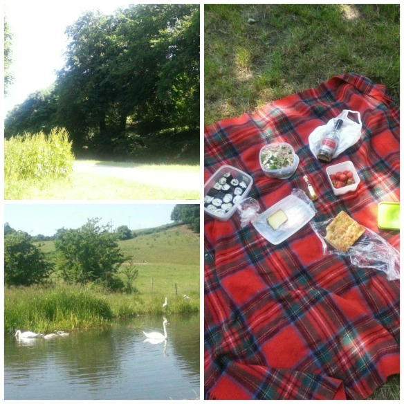 Canalside picnic, swans and signets
