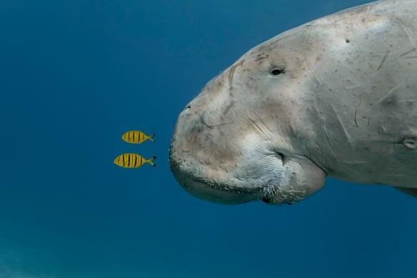 CREDIT: Douglas Seifert/Wildlife Photographer of the Year<br />USA