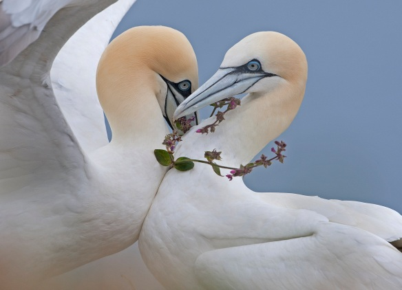 CREDIT: Steve Race / Wildlife Photographer of the Year UNITED KINGDOM