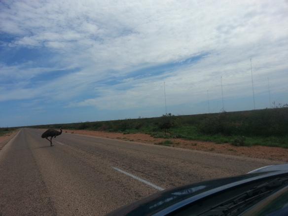 Emu, Western Australia