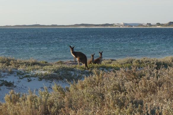Kangaroo Point, Western Australia